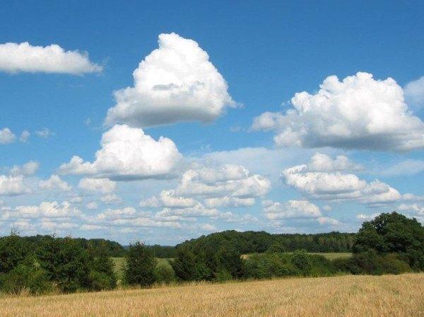 cumulus mediocris