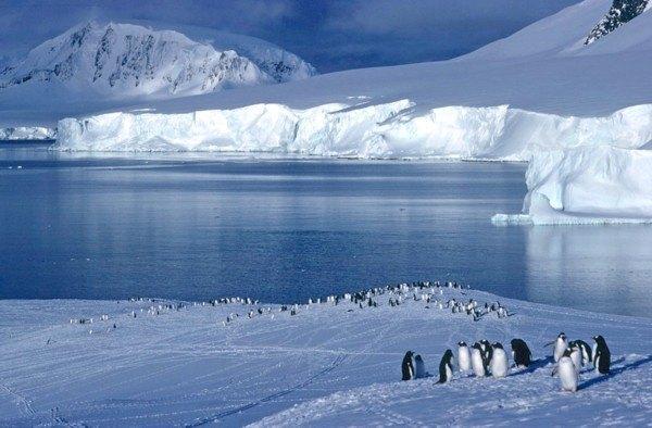 Antarctic-continet